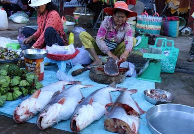 Campuchia hủy bỏ lệnh cấm nhập khẩu cá từ Việt Nam.