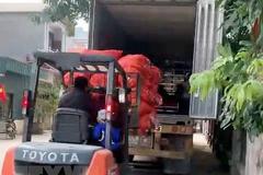 Hải Dương xuất bán 48 tấn cà rốt trong ngày mùng Một Tết Tân Sửu