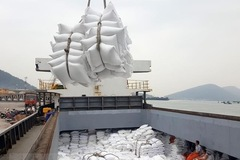 Giá gạo xuất khẩu vượt 550 USD/tấn