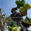 """<p class=""""Normal""""> Bà Lê Thị Thọ (72 tuổi ở Lạc Trung) đã đến từ sáng sớm để mua cà chua. Trưa nay, bà quay lại mua su hào và 23h sẽ đến mua ổi. Bà cho biết mình muốn ủng hộ người dân Hải Dương. Số rau mua về bà vừa ăn, vừa chia cho hàng xóm.</p>"""