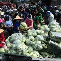 <p> Xe chở 5,5 tấn rau được người dân hỗ trợ để chuyển xuống vỉa hè. Mỗi túi được đóng sẵn 20 củ su hào hoặc 7 quả bắp cải có giá 50.000 đồng.</p>