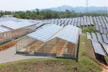 Quảng Trị: Chấp thuận chủ trương dự án trang trại kết hợp điện mặt trời áp mái