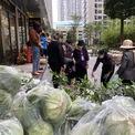 <p> Tại một điểm bán khác nằm trong khuôn viên một khu đô thị tại xã Đa Tốn, huyện Gia Lâm, Hà Nội, người dân cũng tập trung khá đông để mua hàng ủng hộ người dân Hải Dương. Mặt hàng được bày bán là bắp cải, cà rốt, xoài hạt lép, bưởi.</p>