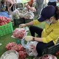 <p> Cà chua được đóng gói theo khối lượng 4kg mỗi túi và có giá 25.000 đồng.</p>