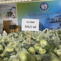 <p> Su hào được bán với giá 35.000 đồng/túi 10kg với 12-16 củ.</p>