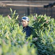 Người trồng rau xanh, hoa tươi của Hà Nội kém vui vì ế ẩm