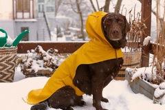 Zara lần đầu bán áo khoác, khăn quàng cổ cho chó