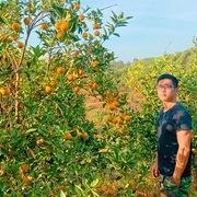 Chàng trai Hà thành bỏ bằng giỏi, lên núi trồng cam