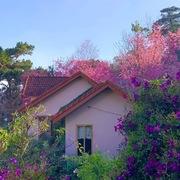 Ngôi nhà trăm sắc hoa đẹp như mơ giữa lưng chừng đồi ở Đà Lạt