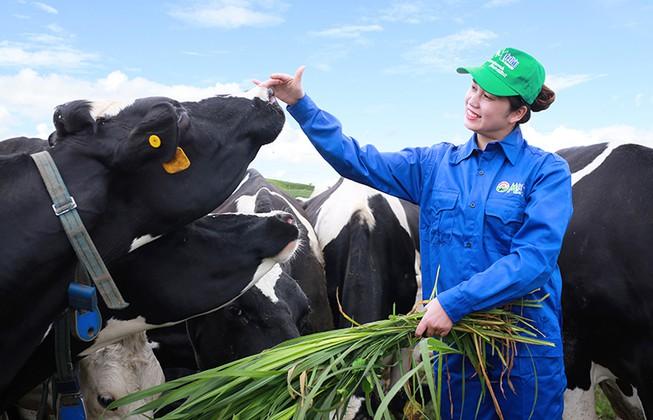 Mộc Châu Milk đặt kế hoạch lãi tăng 13,5%