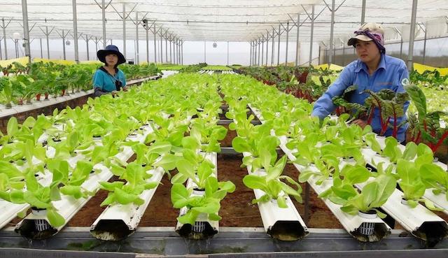 Hướng tới mục tiêu 1,2-1,5 triệu doanh nghiệp: Kỳ vọng nội lực Việt