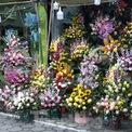 """<p class=""""Normal""""> Các cửa hàng đều cắm sẵn thành từng bó, lẵng hoa với màu sắc rực rỡ để khách dễ lựa chọn.</p>"""