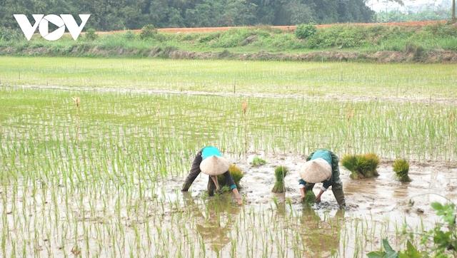 Đồng bằng sông Cửu Long chỉ xuống giống lúa vụ Hè Thu ở khu vực chủ động nguồn nước