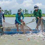 Tổng Thư ký VASEP: Xuất khẩu cá tra sẽ tăng 5% và đạt 1,6 tỷ USD năm nay