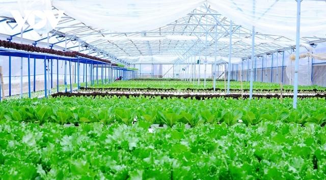 Lâm Đồng đầu tư 260 tỷ đồng phát triển nông nghiệp hữu cơ