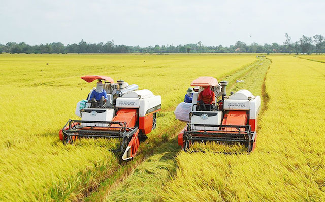 Giá lúa gạo tăng cao, thương nhân xuất khẩu chốt bán song song. Ảnh: Báo Chính Phủ.