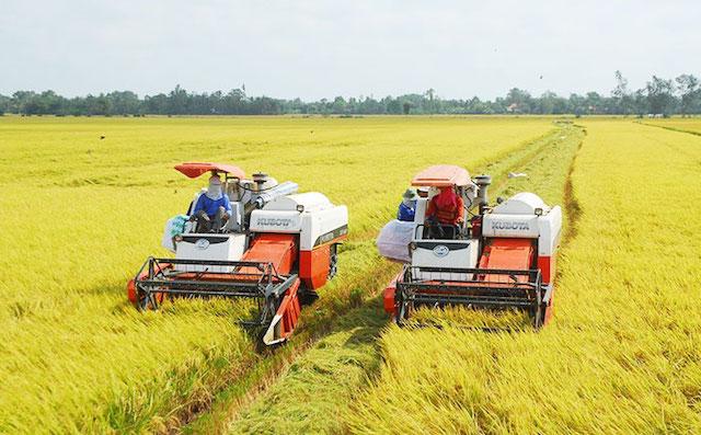 Giá lúa gạo tăng cao, thương nhân xuất khẩu chốt bán song song