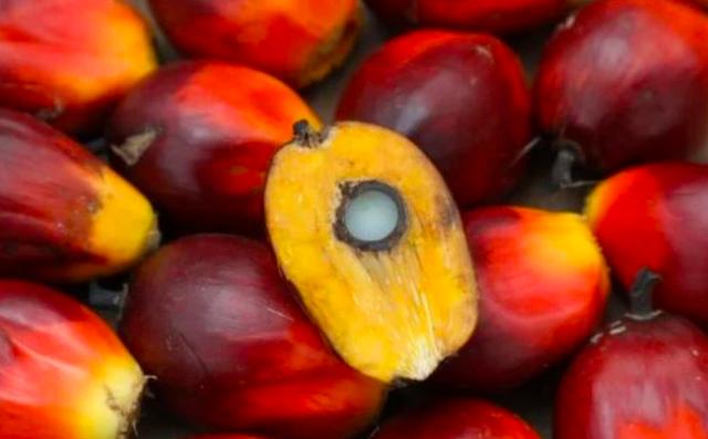 Giá dầu thực vật 'âm thầm' tăng gấp rưỡi trong nửa năm qua