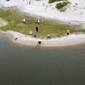 """<p class=""""Normal""""> Tại các hồ nước đọng xung quanh mỏ hàng ngày có nhiều người vào đứng trên bờ cát câu cá.</p> <p class=""""Normal""""> Ngày 19/3, một lãnh đạo tỉnh Hà Tĩnh cho biết, việc dừng khai thác mỏ sắt Thạch Khê được Ban thường vụ Tỉnh ủy bàn rất kỹ lưỡng. Theo vị này, mỏ sắt quá gần biển và thành phố Hà Tĩnh, tiếp tục khai thác sẽ gây ra nhiều hệ lụy, ảnh hưởng đến sức khỏe con người. """"Vài tuần trước, tỉnh tiếp tục có văn bản gửi Chính phủ, đề nghị đưa vấn đề dừng khai thác mỏ sắt Thạch Khê xin ý kiến cấp có thẩm quyền"""", vị này nói.</p>"""