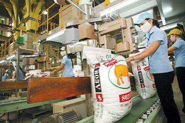 Thị trường thức ăn chăn nuôi: Bấp bênh vì phụ thuộc nhập khẩu