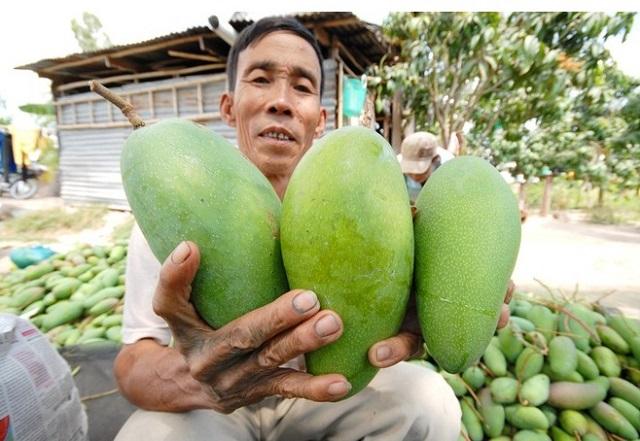 Xoài Việt nhập khẩu vào Mỹ tăng mạnh, giá cao.