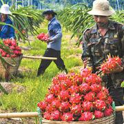 Đề án phát triển ngành chế biến rau quả: Khuyến khích doanh nghiệp đầu tư trung tâm chiếu xạ thực phẩm tiêu chuẩn quốc tế