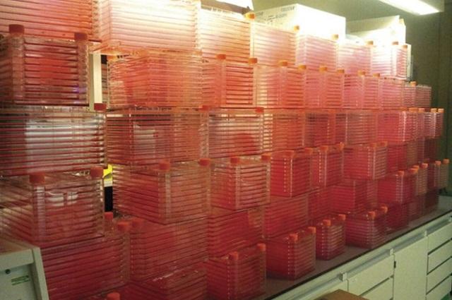 Công ty nuôi cấy thịt trong phòng thí nghiệm nhận vốn 47 triệu USD