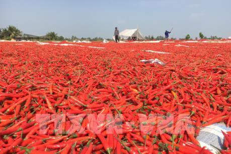 Thông tin Trung Quốc cấm nhập khẩu ớt từ Việt Nam là không chính xác