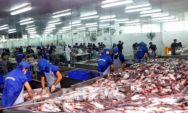 Chế biến cá tra xuất khẩu tại Công ty TNHH Thủy sản Biển Đông (Cần Thơ). Ảnh: Thanh Liêm-TTXVN.