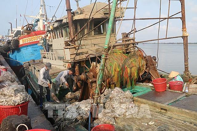 Tàu giã cào - một loại hình đánh bắt sẽ bị chấm dứt hoạt động trong thời gian tới để bảo vệ nguồn lợi thủy sản. Ảnh: Hoàng Nhị - TTXVN