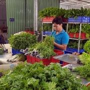 Có nên duy trì hoạt động nông nghiệp ở thành phố Thủ Đức?