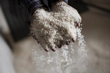 Thị trường nông sản thế giới tuần qua: Giá gạo châu Á đồng loạt sụt giảm