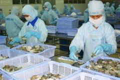Xuất khẩu tôm ở Cà Mau có nhiều tín hiệu khả quan sau dịch