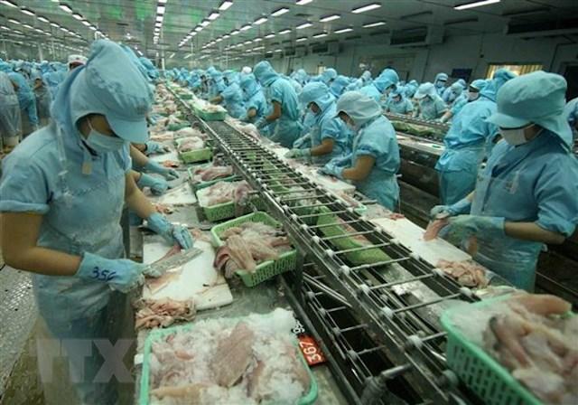 Chế biến cá tra xuất khẩu tại nhà máy của Tập đoàn Sao Mai (tỉnh Đồng Tháp). (Ảnh: Vũ Sinh