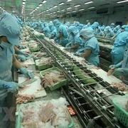 Đồng Tháp: Hoạt động xuất khẩu ổn định, giá cá tra nguyên liệu tăng