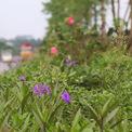 <p> Dải phân cách giữa rộng 3 m được trồng 3 tầng cây xanh. Đây là tuyến đường huyết mạch giúp kết nối quận Long Biên, các xã Đông Dư, Dương Xá và tỉnh Hưng Yên, quốc lộ 5...</p>