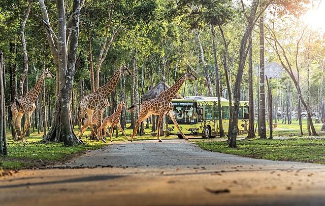 Vinpearl Safari Phú Quốc là điểm đến khám phá thiên nhiên hoang dã không thể bỏ lỡ.