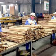 Nhập khẩu gỗ nguyên liệu: Cần đề phòng nguy cơ điều tra phòng vệ thương mại