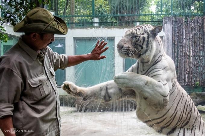 Sở thú lâu đời nhất TP HCM lỗ đậm