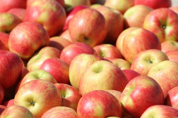 Việt Nam không bị ảnh hưởng bởi lệnh cấm nhập trái cây của Algeria