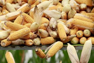 Nguồn cung thế giới thắt chặt, giá hàng loạt nông sản lập đỉnh 7 - 8 năm