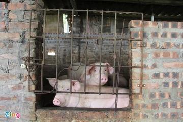 Vì sao giá thức ăn chăn nuôi liên tục tăng?