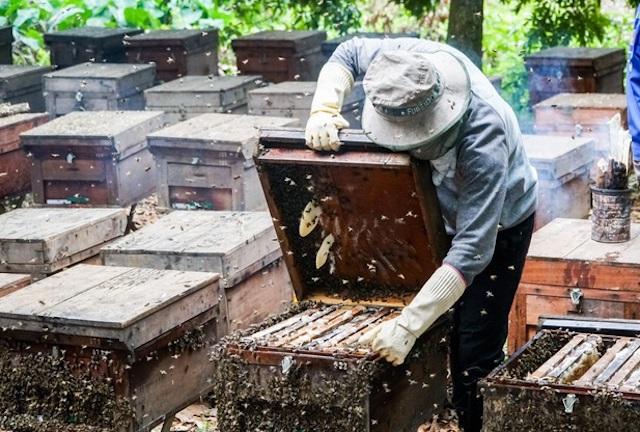 Bộ Thương mại Mỹ tiếp nhận hồ sơ đề nghị điều tra chống bán phá giá mật ong Việt Nam. Ảnh: Dân Trí.