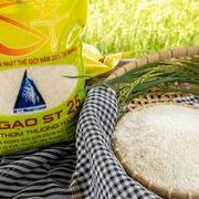'Cha đẻ' gạo ST25 muốn nhượng lại bản quyền giống cho Nhà nước
