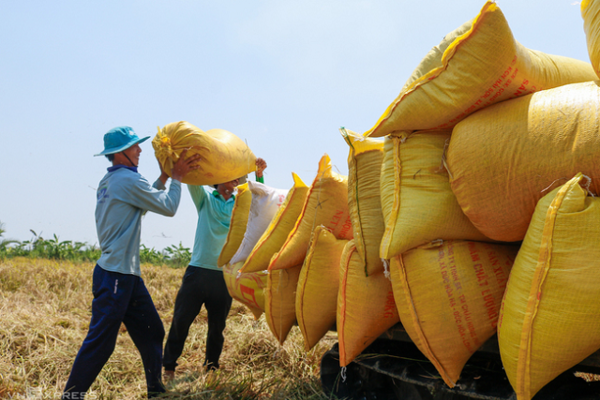 Xuất khẩu gạo 4 tháng thu về trên 1 tỷ USD