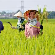 Vinaseed, Lộc Trời, Đạm Cà Mau… lãi đậm khi nông dân tăng sản xuất