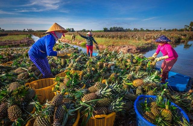 Đề xuất hỗ trợ 60 triệu đồng với mỗi lần đăng ký bảo hộ nhãn hiệu ở nước ngoài. Ảnh: MekongDeltaExplorer.