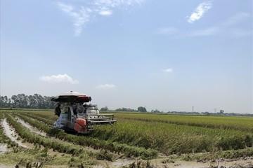 Đề xuất sân bay ở Ứng Hòa bị 'vỡ': Nhà đầu tư tháo chạy không kịp?