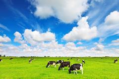 Mộc Châu Milk chia cổ tức 15%, nhóm Vinamilk thu về 112 tỷ đồng