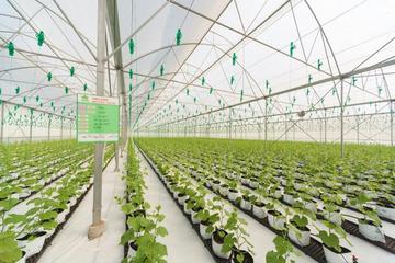 PAN Farm chào mua thêm cổ phần VFG để nắm trên 51%